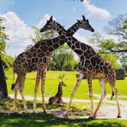 Zoo Miami General Admission